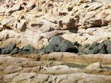 Une veine de rochers noirs
