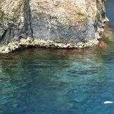 Un trottoir à algues coralligène à Scandola