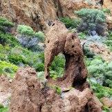 Un éléphant à Scandola
