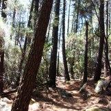 Toujours sous les pins