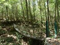 Un pont de singe