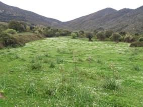 Le sentier passe au milieu des champs