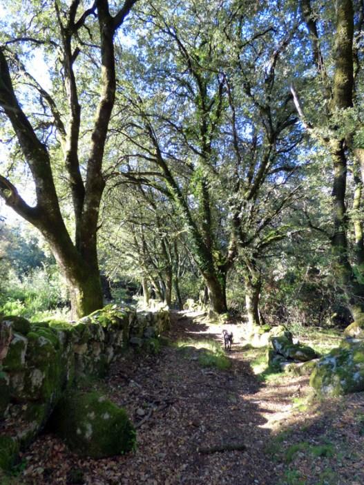 Le chemin suit les murets de pierres