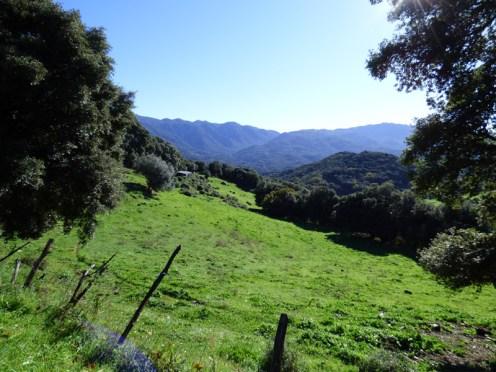 Un champ à Zigliara