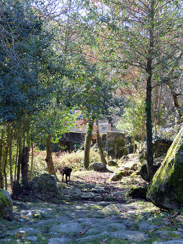 Le chemin est magnifique en automne