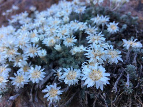De petites fleurs sur le chemin