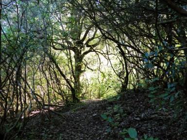 La forêt est dense