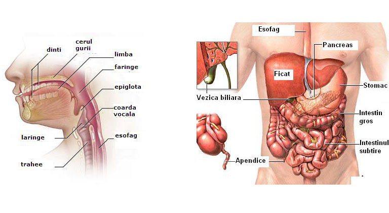 fondurile paraziților tractului digestiv cel mai bun colon curăță detox gnc