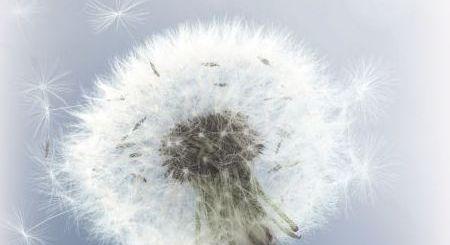 rinita-alergica-alergia-nazala