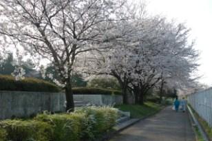 大桑ぐるぐる公園2013春_その24♪