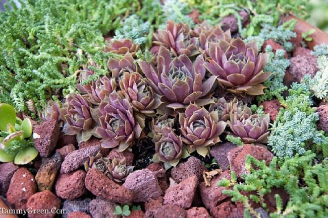 Rick Bayless | Decorative Planting