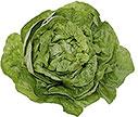 PHOTO: lettuce