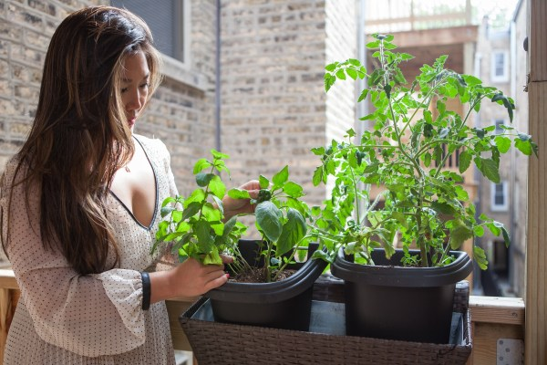 chicago-food-girl-burpee-urban-gardening