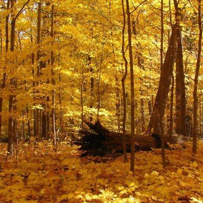 أفضل الأماكن لمشاهدة أوراق الخريف المتساقطة في شيكاغو – الجزء الثاني