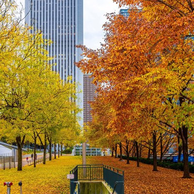 أفضل الأماكن لمشاهدة أوراق الخريف المتساقطة في شيكاغو – الجزء الأول