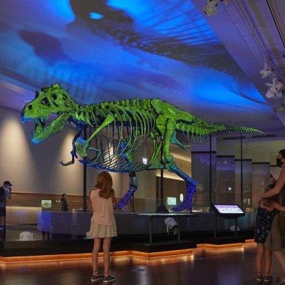 إعلان متحف «شيد» المائي والمتحف الميداني بالفعل عن خطط إعادة الافتتاح