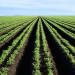 Revolutionizing Agriculture to Address Economic Growth More Effectively