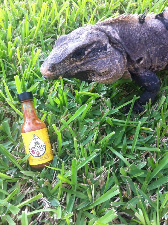 Iguana and Chicaoji bitty bottle in Mexico