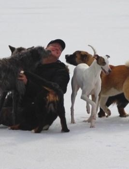 Miksi koiramaailmassa suvaitsevaisuus on niin vaikeaa?