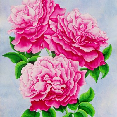 Three Pink Roses - Watercolour - 58cm x 47cm - by Christine Evans