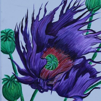 Purple Flower - Acrylic - 20x20
