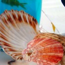 Table centres featuring live goldfish and shells