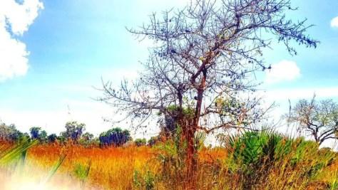Shrubs & Trees, Saadani National Park Tanzania not Holy Crepe Kololo