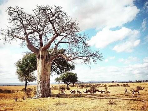Trees in Mikumi National Park, Tanzania
