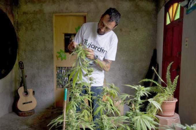 Uruguay: Yes we cannabis