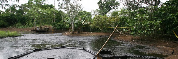 Forests, oil and energy: time to re-capture our governments!