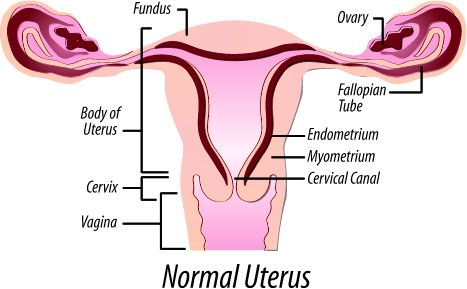 Next frontier in transplants: The uterus