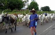 Fulani herdsmen and true federalism