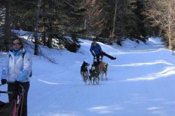Attelage chiens de traineau Vercors