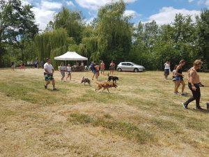 Mush and Rando activités chien de traineau