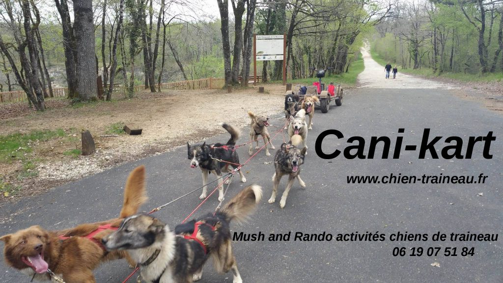 Cani-kart chiens de traineau Mush and Rando