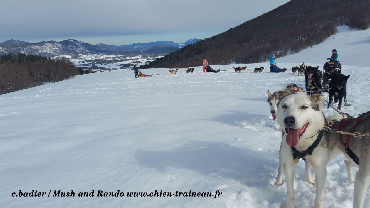 Rencontrer nos chiens de traineaux
