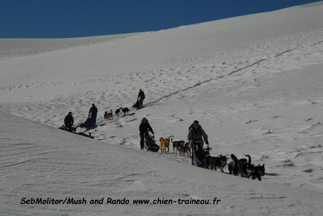 Sport d'hiver Chien de traineau