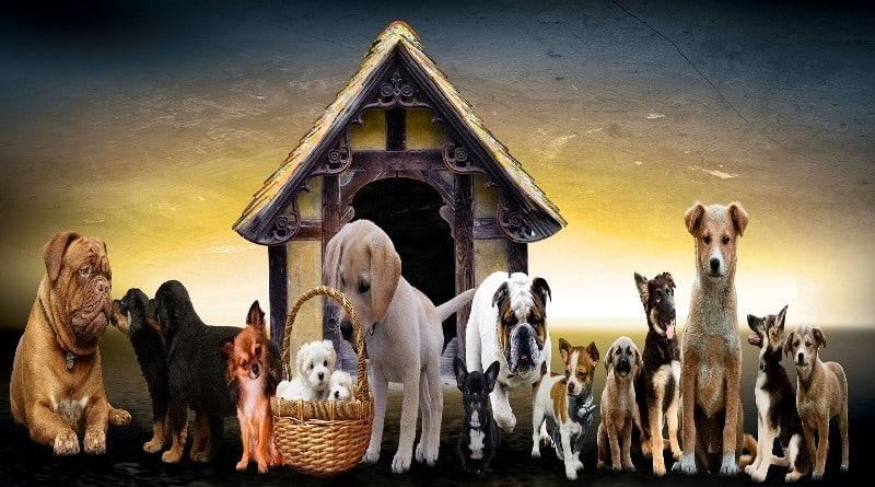 Quelle race de chien, chiot est fait pour moi, Grand Petit Moyen Gros ? Venez le découvrir !