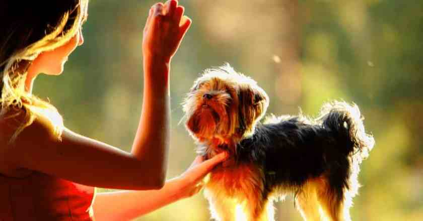 dresser un chien facilement sans crier