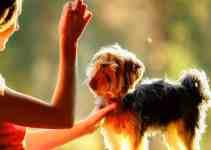Comment dresser un chien adulte des méthodes simples