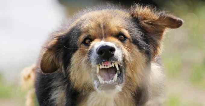 Comment rendre votre chien moins agressif ?