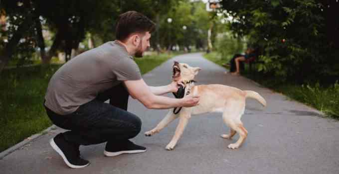 Comment arrêter un chien qui aboie sans cesse en promenade 6 conseils pour réussir
