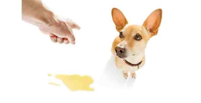 Comment avoir un chien propre en 4 méthodes surprenantes