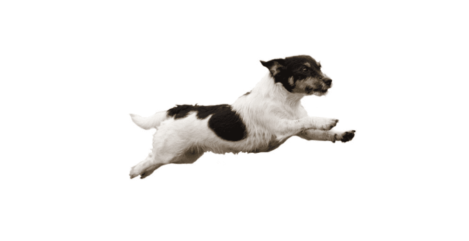 Comment éduquer son chien au rappel ?