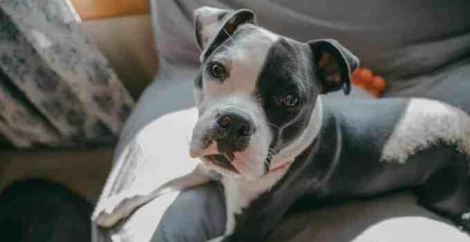 Comment se faire comprendre par son chien uniquement à la voix