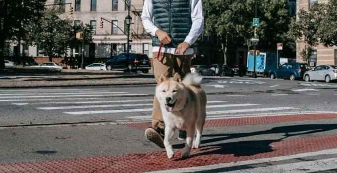 Comment bien tenir son chien en laisse en promenade