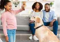 Comment faire dresser son chien à la maison