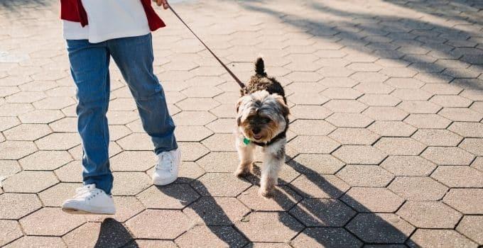 Comment apprendre à son chien à ne pas tirer sur la laisse ?