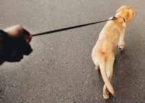 Tenir le chien en laisse 5 exercices indispensables!