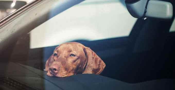 Comment apprendre à son chien à rester calme en voiture ?